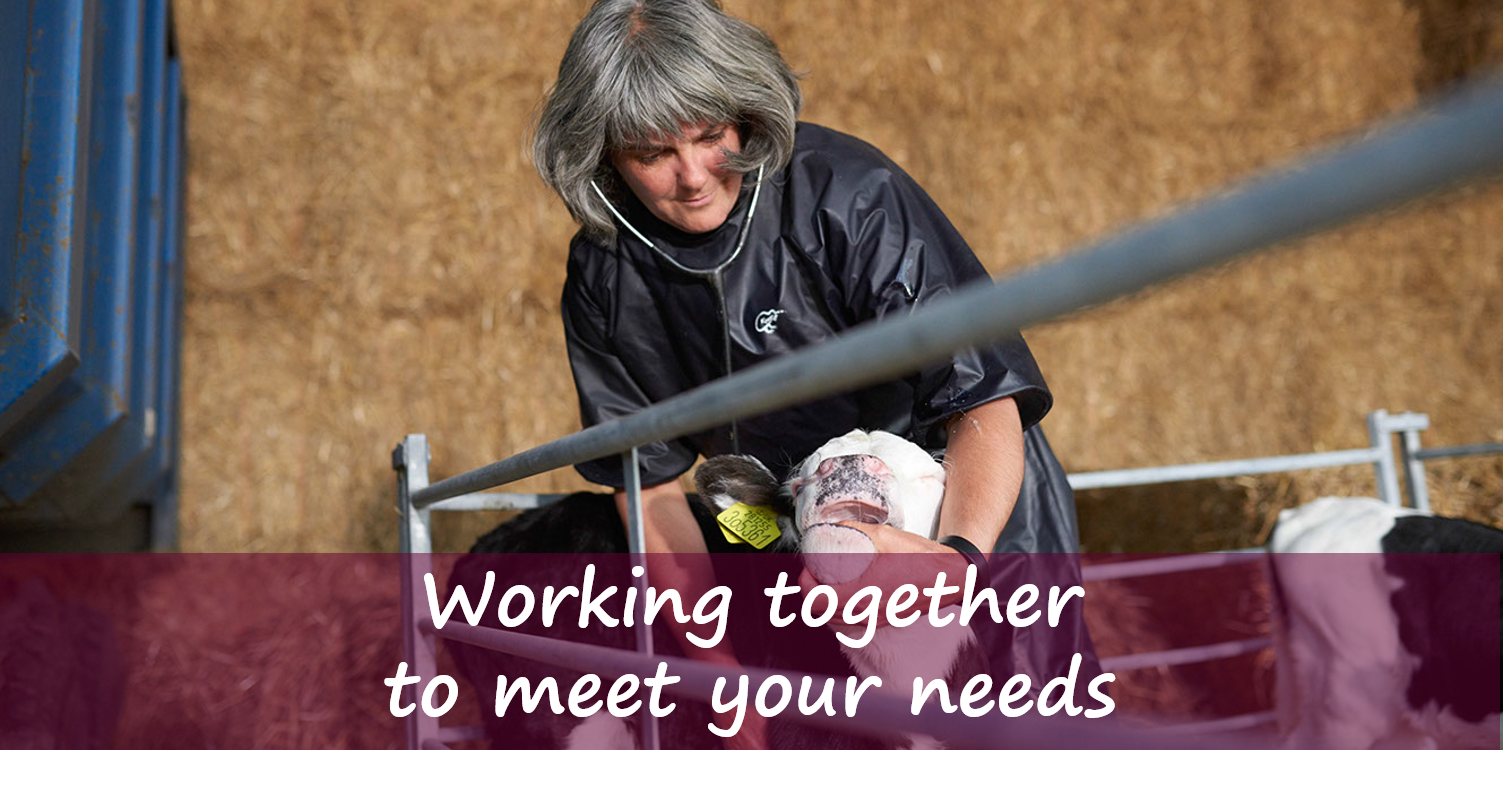We provide all aspects of Livestock Veterinary work